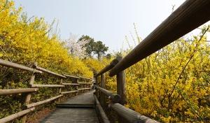 140408_korea_spring_3